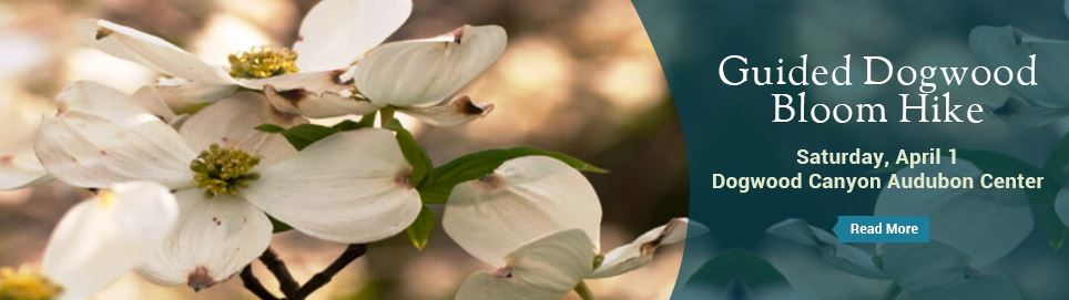 Guided Dogwood Blooms Hike