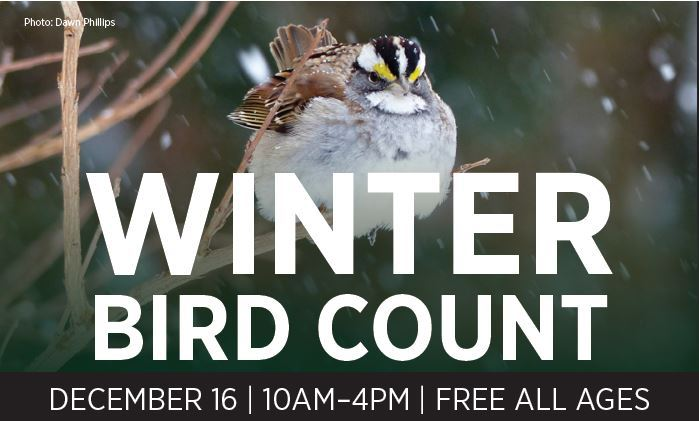 Winter Bird Count 2017