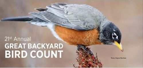 2018 great backyard bird count