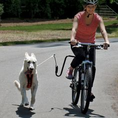 dog biking