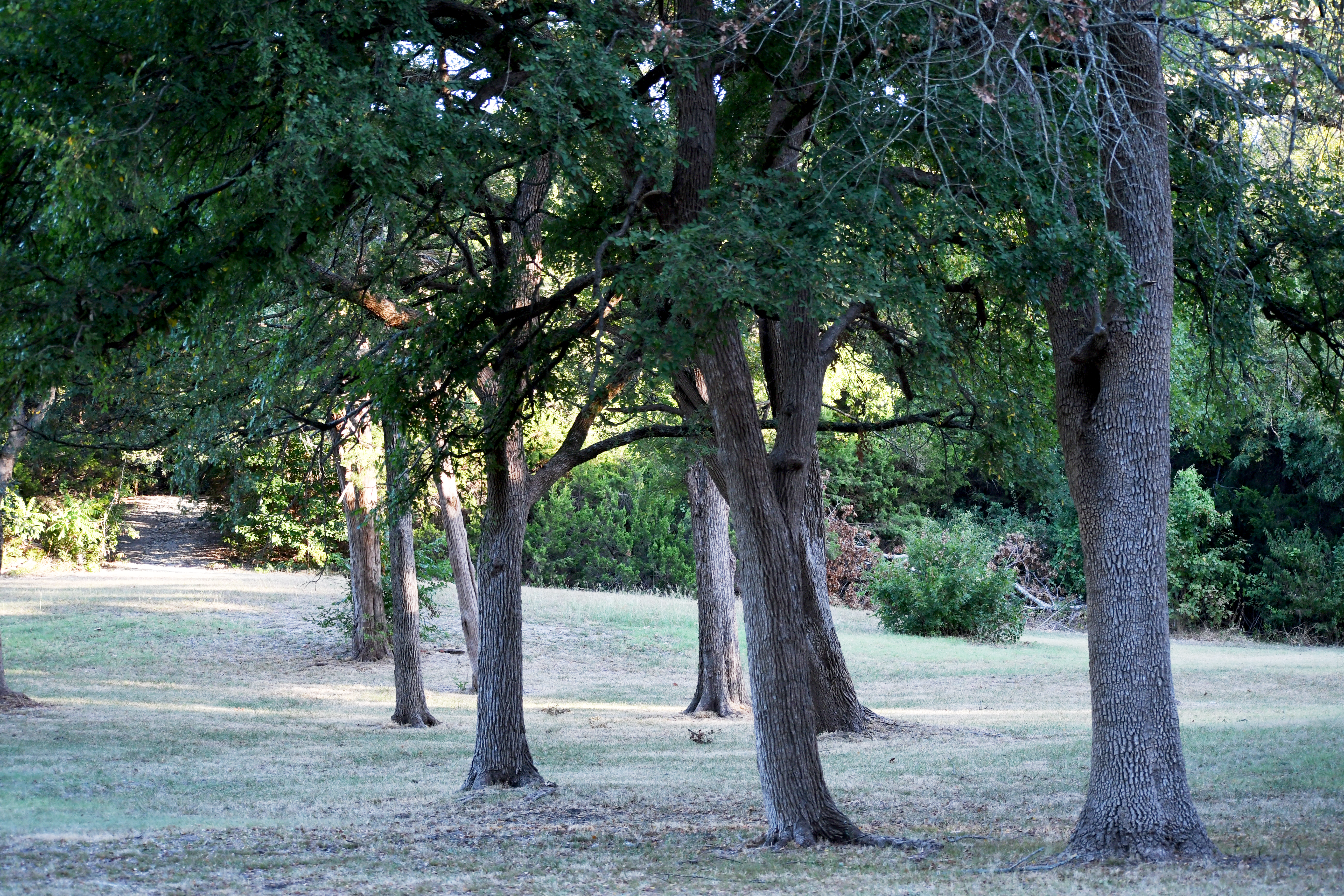 Lorch Park - Trees 2 (1)